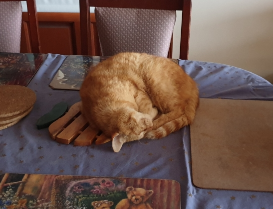 Sleeping on the table is his new favourite